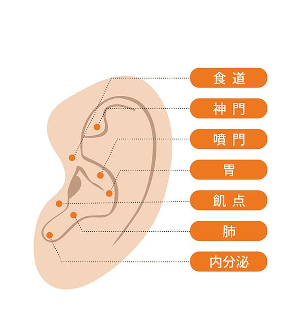 耳つぼのイメージ