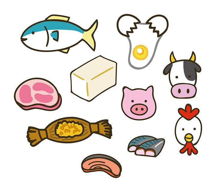 タンパク質が多い食材のイメージ